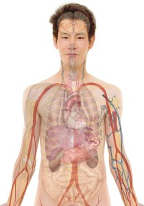 photo of the male human body